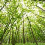 グリーンインフラレンディング|私がグリーンインフラレンディングに投資しない理由
